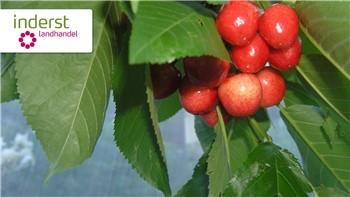 Drosophila suzukii: combattere e prevenire il moscerino dei piccoli frutti