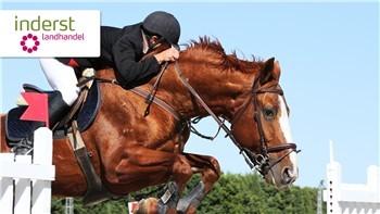 Il miglior mangime per i cavalli sportivi