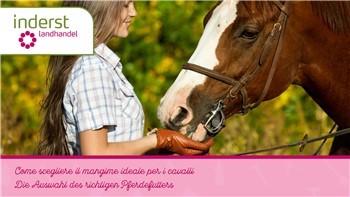 Come scegliere il mangime ideale per i cavalli