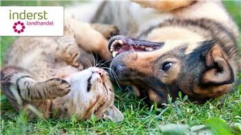 Giornate di sconti su mangime per cani e per gatti da Inderst