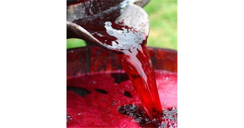 Succo vino sidro inderst for Formiche volanti in casa