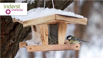 Casetta per uccelli: informazioni e consigli utili