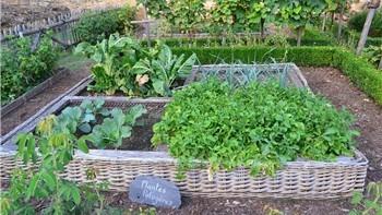 Crea il tuo orto!
